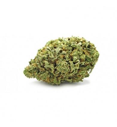 Bubble Gum (CBD 3.1% - THC...